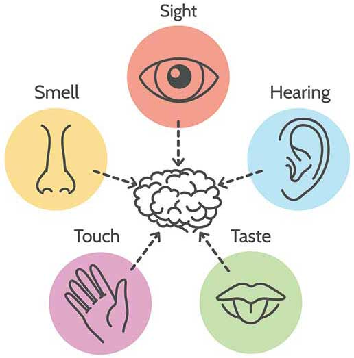 The most of your five senses